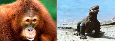 Biodiversité Indonésie