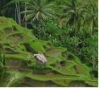 Projet Dunia-rizière