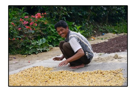 11 - Coffee-farmer---takengon-Indonesia
