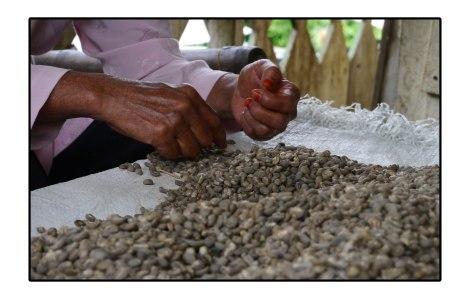13 - coffee-selection---Takengon,-Indonesia