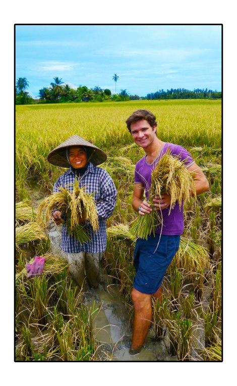 2 - Happy-Rice