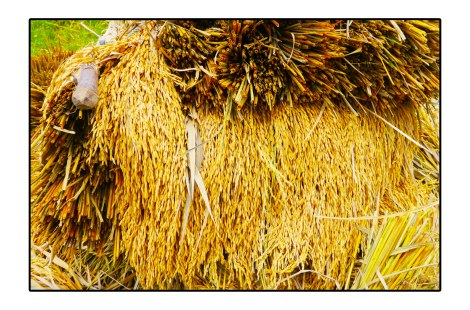 4 - Rice---Banda-aceh,-Indonesia