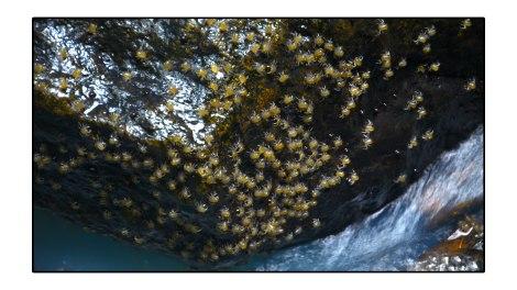Tiny-Winny-Crab---Palau-Weh-Indonésie