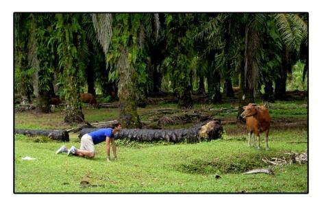 8- Moi avec la vache