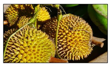 13 - Durian-me