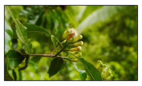 41 - cinke-flower
