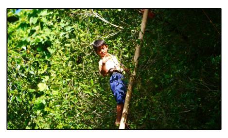 43 - kid-cinke-tree