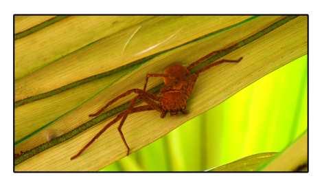 spider---sulawesi